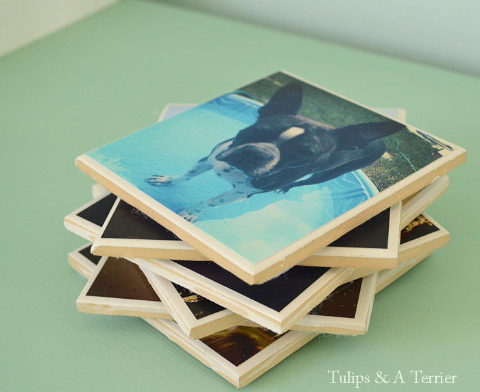 DIY Photo Coasters - Tulips & A Terrier