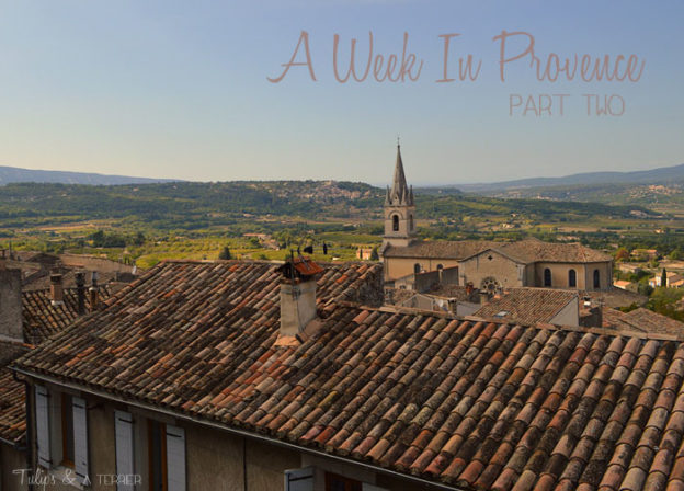 A Week In Provence: Part Two - Tulips & A Terrier